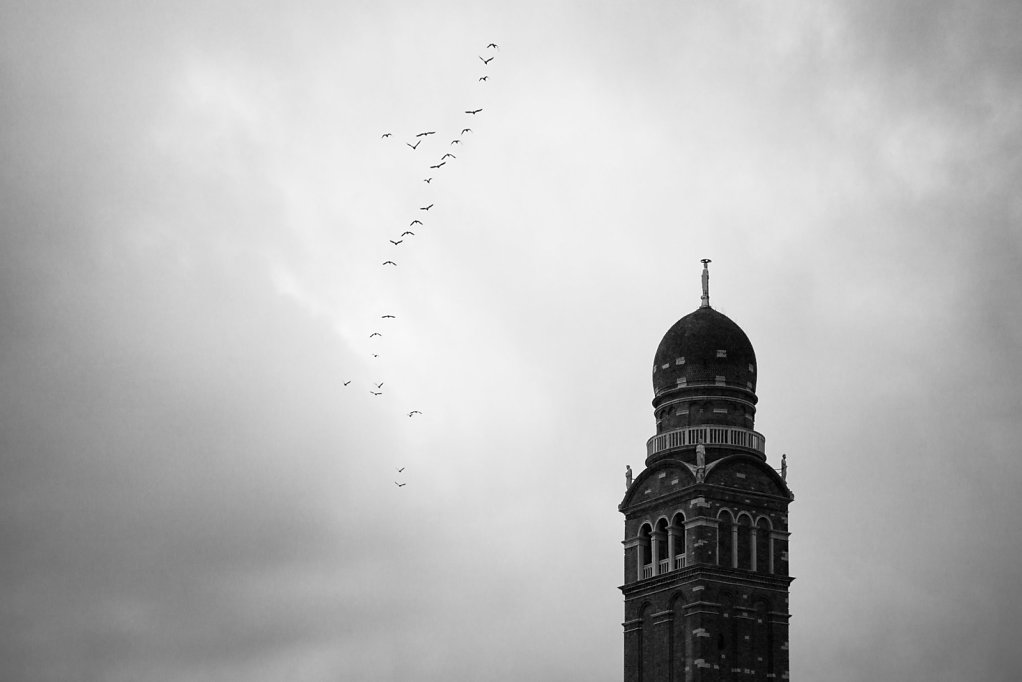 Seagulls with Bell Tower